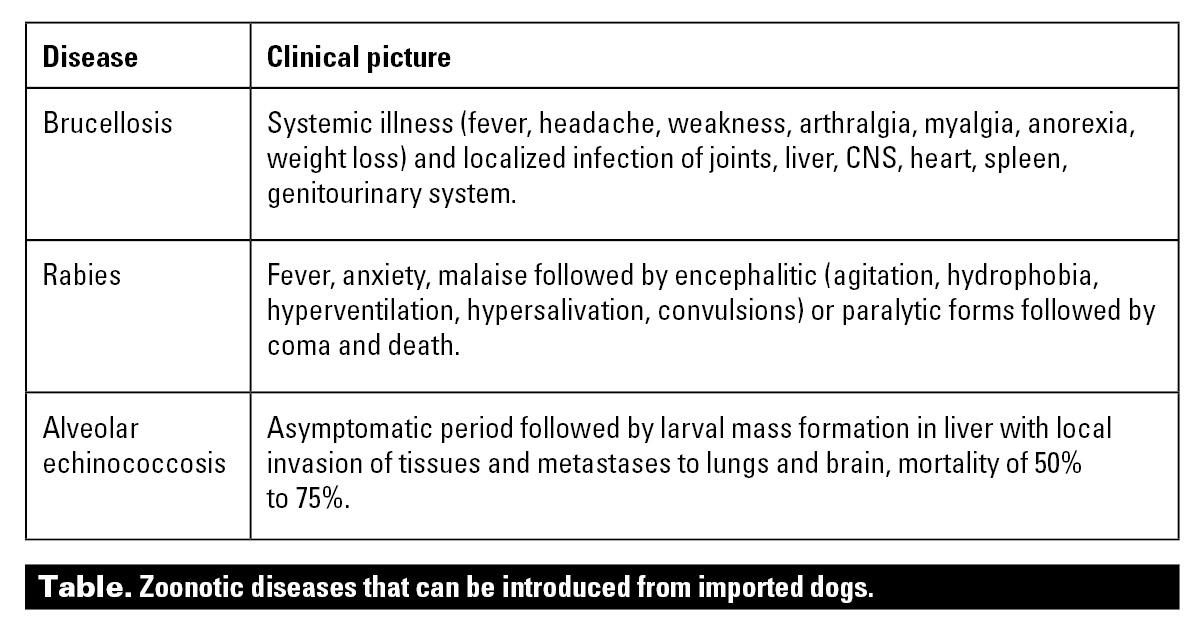 Brucellosis and other diseases imported with dogs | British Columbia