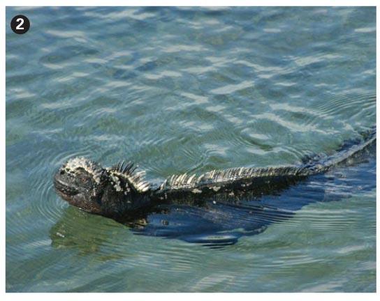 Turtles and tutelage: CME in Darwin's playground | British