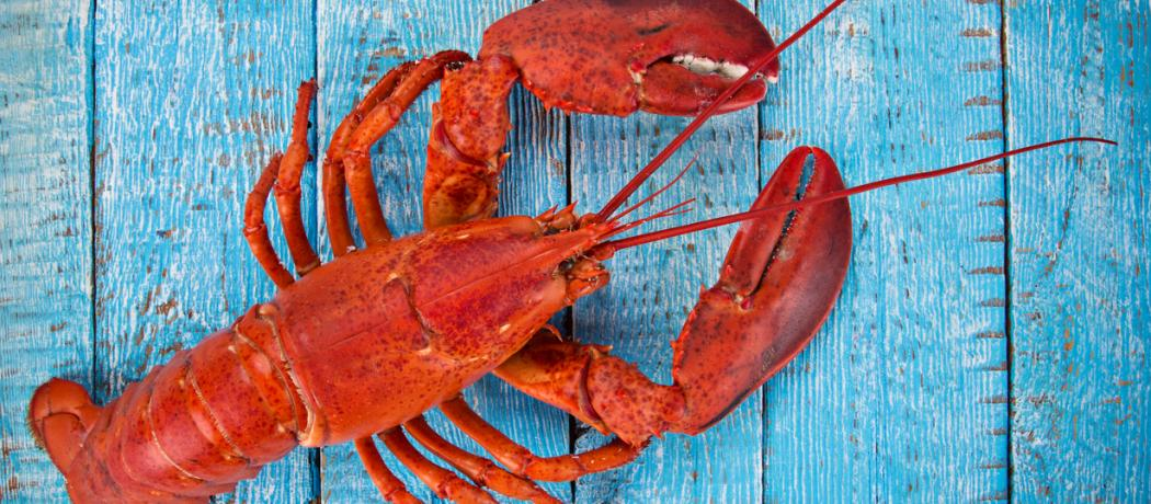 Lobsters, pain, and the sounds of distress in cognitively impaired people