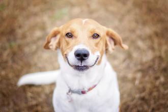 Brucellosis and other diseases imported with dogs