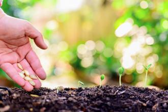 A hand is seen planting seeds