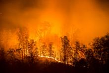 A wildfire