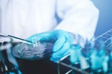 A scientist starts a culture in a Petri dish