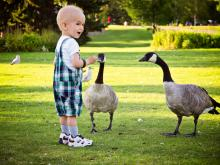 Little boy feeding geese in local park, has had chemotherapy