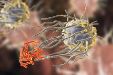 Macrophage engulfing tuberculosis bacteri