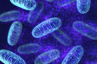Mitochondrial disease resource